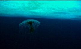 The Wild Blue Yonder (Werner Herzog, 2005)
