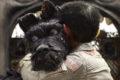 Isla de perros, de Wes Anderson