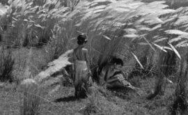 La canción del camino (Satyajit Ray, 1955) – FILMIN