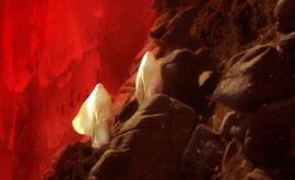 """Presentamos en exclusiva el póster de """"Lúa Vermella"""" de Lois Patiño"""
